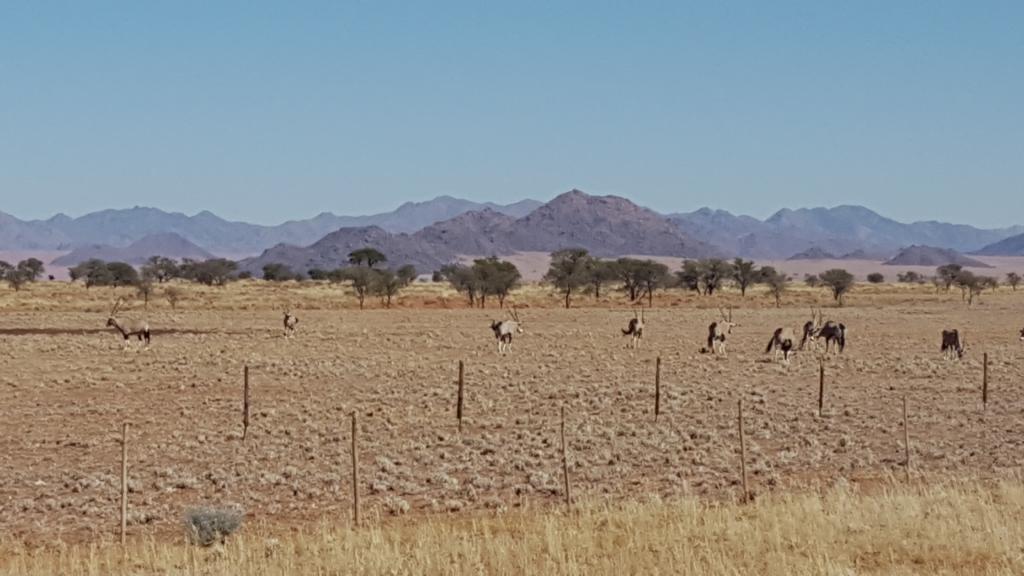 wolvedans-namibia-trip-203
